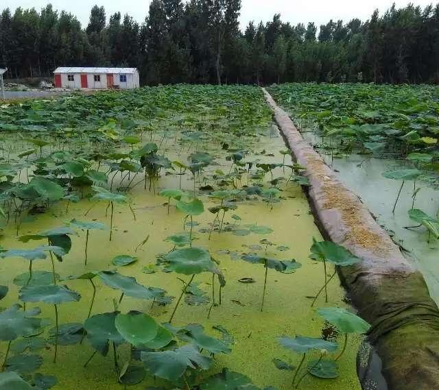 人工养殖场
