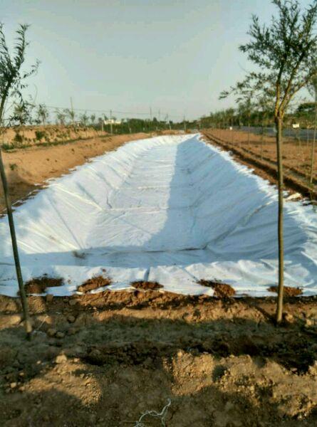 人工水渠工程案例